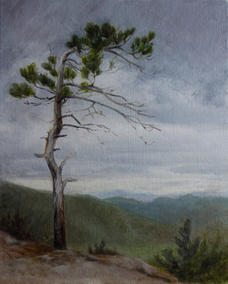 White Pine, Cathedral Ledge