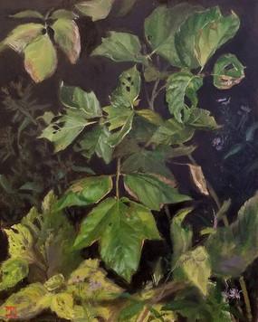Box Elder Leaves