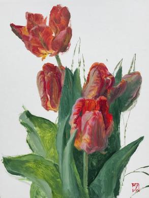 Rainbow Parrot Tulips