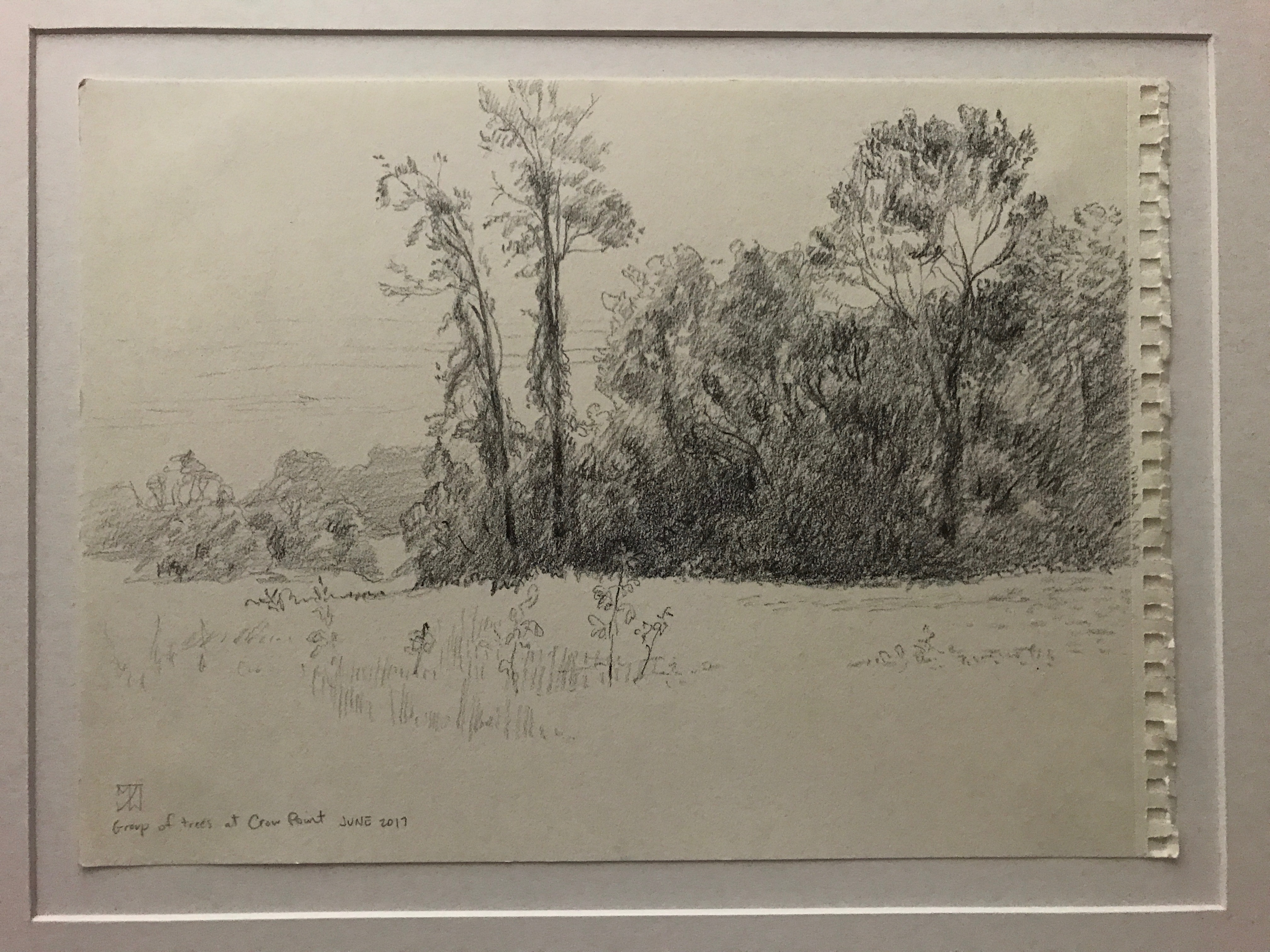 Trees near Crow Point