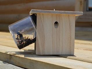 Hanging AST Carpenter Bee Trap