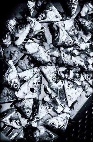 """Projekt """"Obdachlosigkeit der Fische"""""""