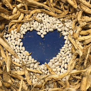 beans are good for the heart