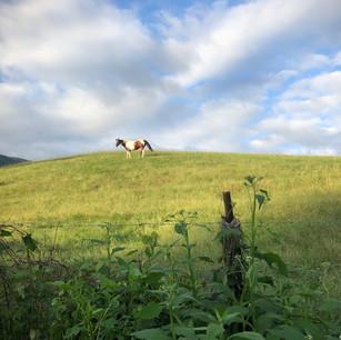 pasture with Smoke Signal Media