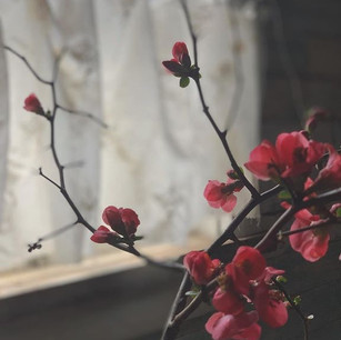 quince by Smoke Signal Media