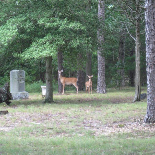 Deer at Murray Grove.jpg