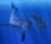 Ocean Rift by Llyr ap Cenydd for the Oculus Quest 2 and Oculus Quest platform
