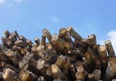 Hevea Wood