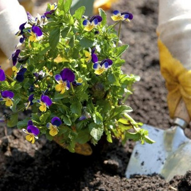 Flower Bed Planting & Maintenance