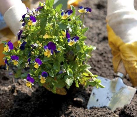 Flower Bed Planting & Maintenance