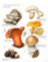Lincoln City edible fungi_edited.jpg