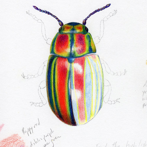 Shiny Insects in Colored Pencil and Ink