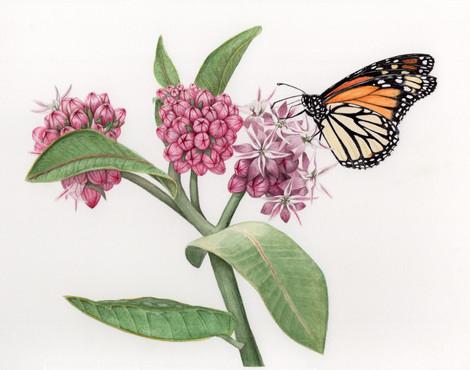 Artistic monarch 300 dpi jpg.jpg