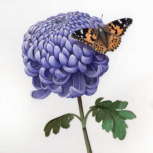 Painted Lady Butterfly and Chrysanthemum Cup