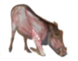 Main-Warthog.jpg
