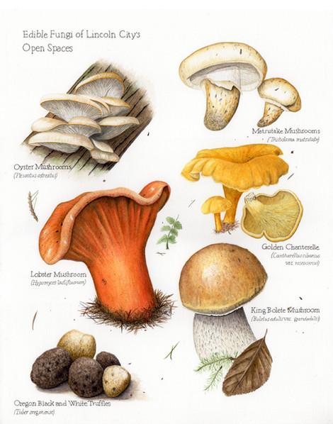 Lincoln City edible fungi