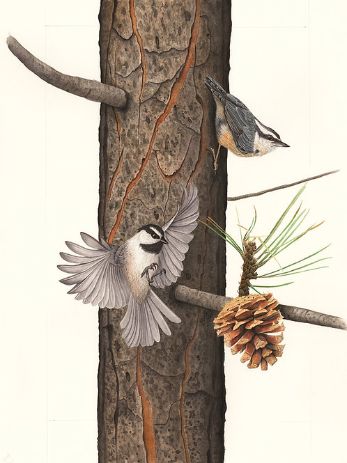 Mountain Chickadee and Red-breasted Nuthatch