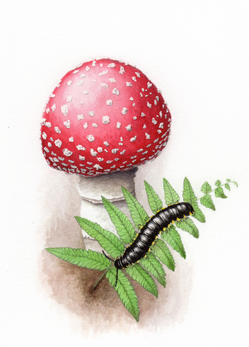 Yellow-spotted millipede with fly agaric