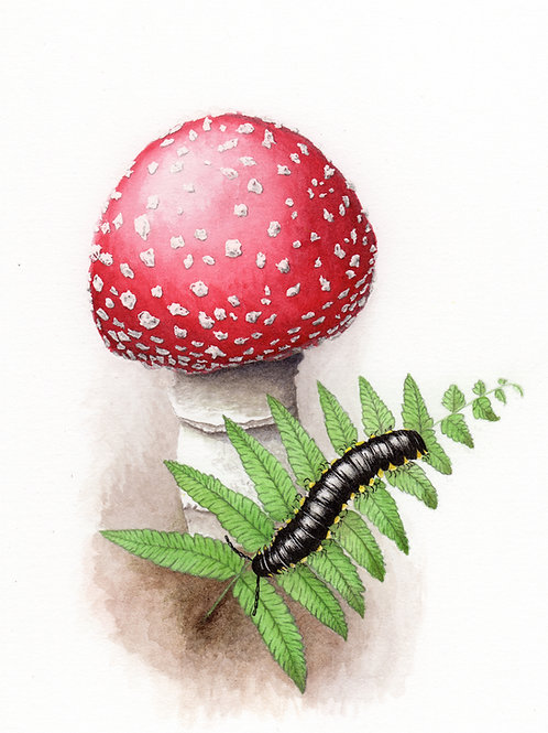 Yellow-spotted millipede with fly agaric mushroom