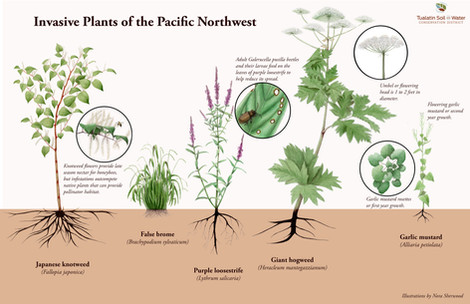 Invasive Plants of the Pacific Northwest