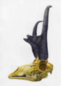 PronghornSkull.jpg