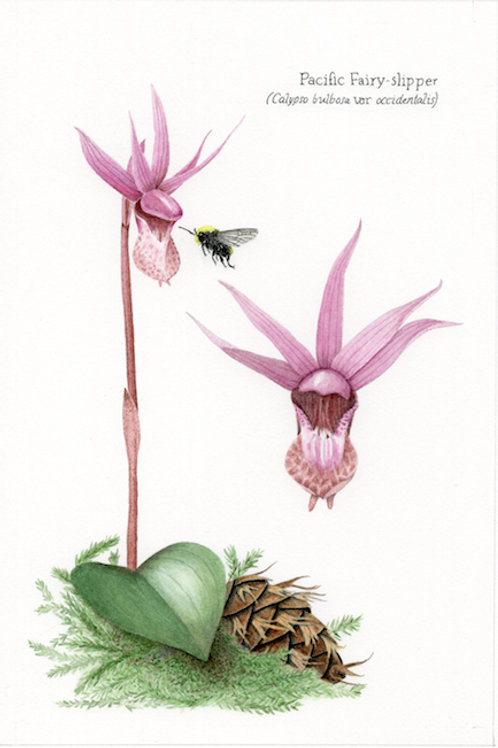 5-card set - Oregon Botanicals And Friends
