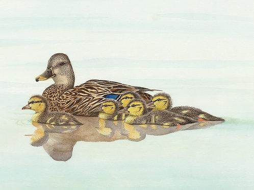 Mallard Mama and Chicks
