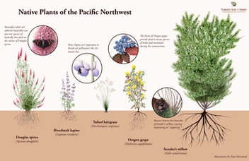 Native Plants of the Pacific Northwest