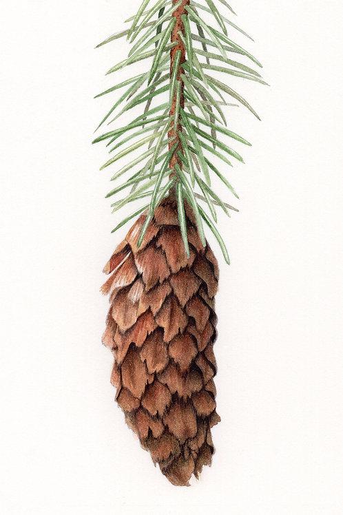 Pine Cones Workshop #2