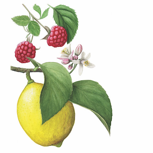 Introduction to Botanical Art in Watercolor - Part 2, Fruit