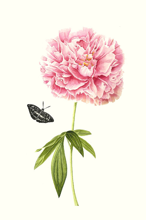 Pink peony with studded sargeant butterfly