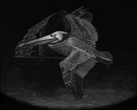 Brown pelican artwork created for t-shirt