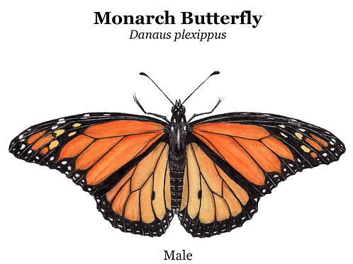 Monarch Butterfly Cup