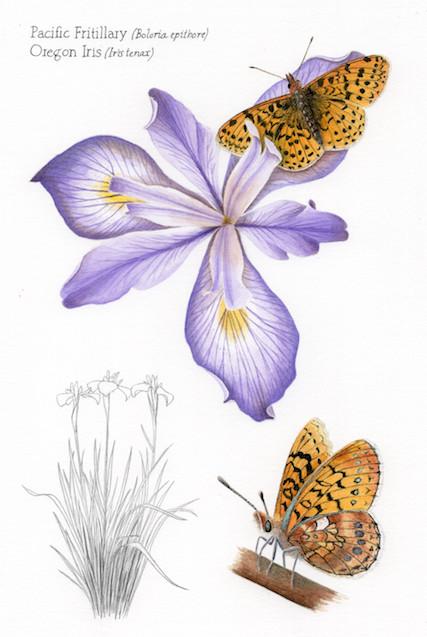Oregon iris and Pacific fritillary