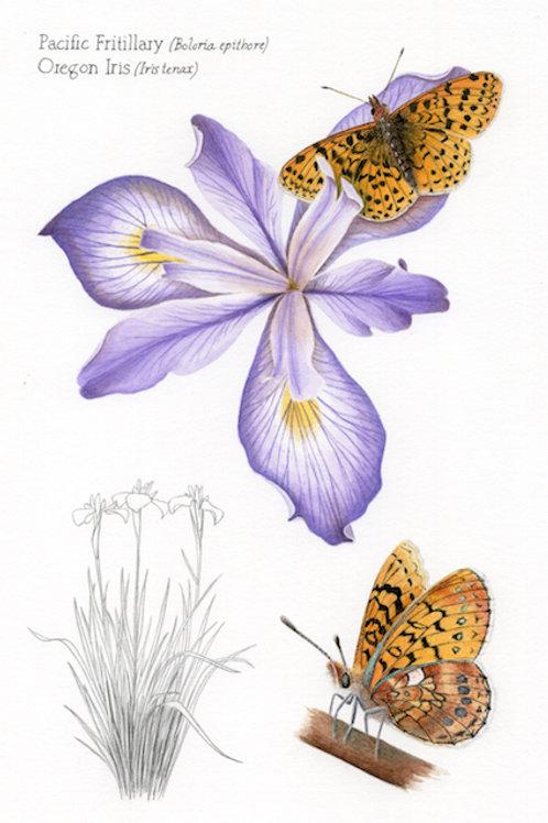 Pacific Fritillary and Oregon Iris