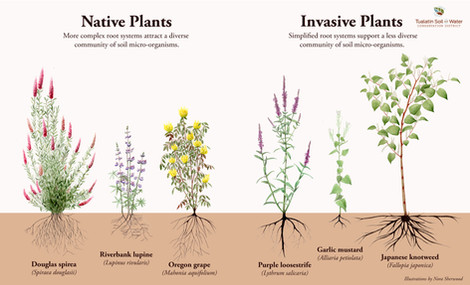 Native and Invasive Plant Comparison