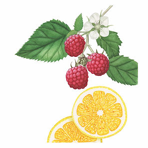 Left lemon raspberry 72 dpi jpg.jpg