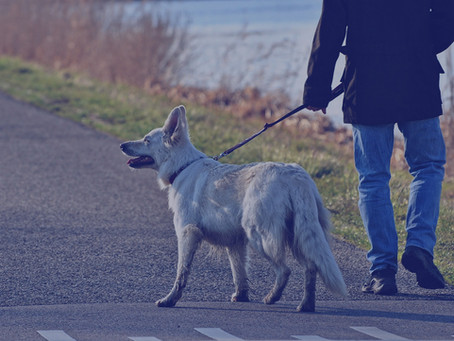 L'uomo con il cane - un racconto di Omar