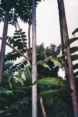 La natura oltre le gabbie