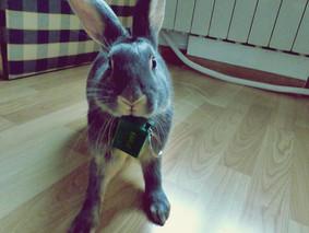 Le lapin n'est pas un chien