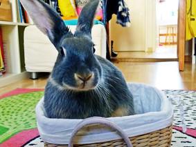 Tour spécial Pâques : 7 étapes pour mettre votre lapin dans un panier (vidéo)