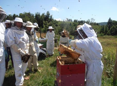 Récolte du miel au rucher-école: