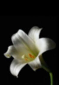 Casket Sprays - Shady Vines Floral Co