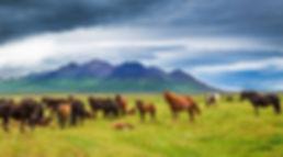 Viaggio dinozze Islanda