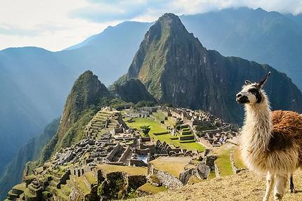 Lama-and-Machu-Picchu-in-Peru-in-South-A