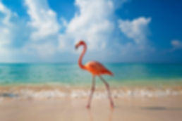 Viaggio di nozze Aruba