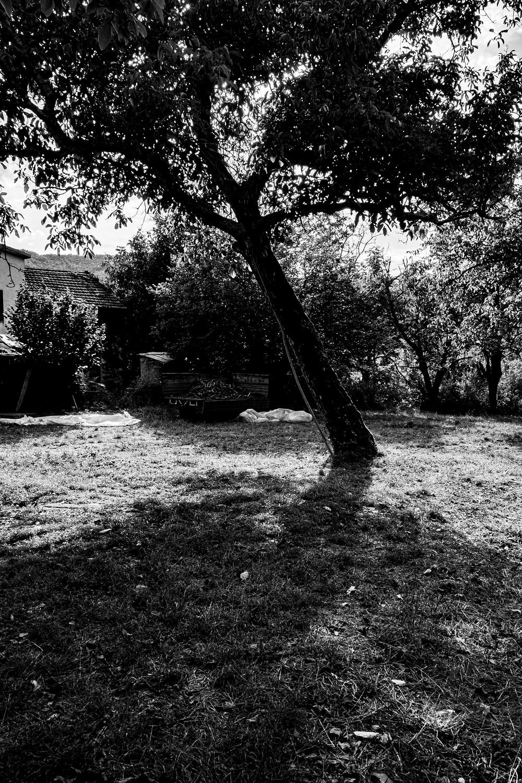 albero in bianco e nero