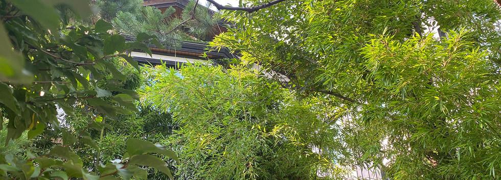 하품하우스 강남점 정원