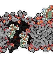 membrane_v7.jpg