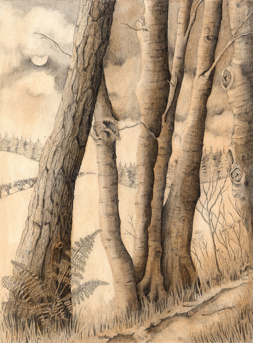 Night Woodland - A tonal pencil drawing with watercolour sepia wash to evoke the tinted lithography of days gone by.
